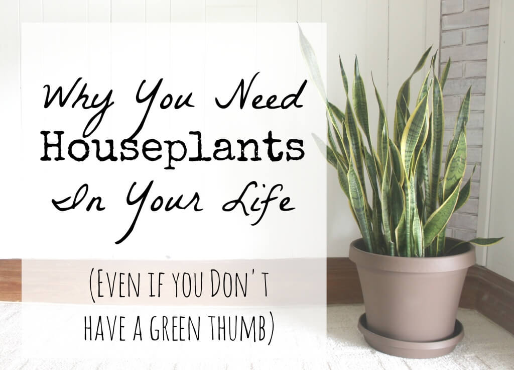 Benefits of having houseplants
