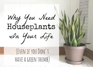 Why You Need Houseplants In Your Life